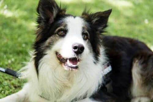 Parklardaki Zehirleri Tespit Ederek Hayat Kurtaran Köpek Albatrox