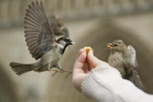 Hayvanlar ve İnsanlar Arasındaki Özel Bağ