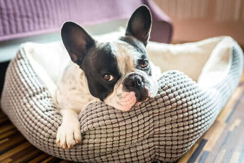 En İyi Köpek Yatağı Nasıl Seçilmelidir