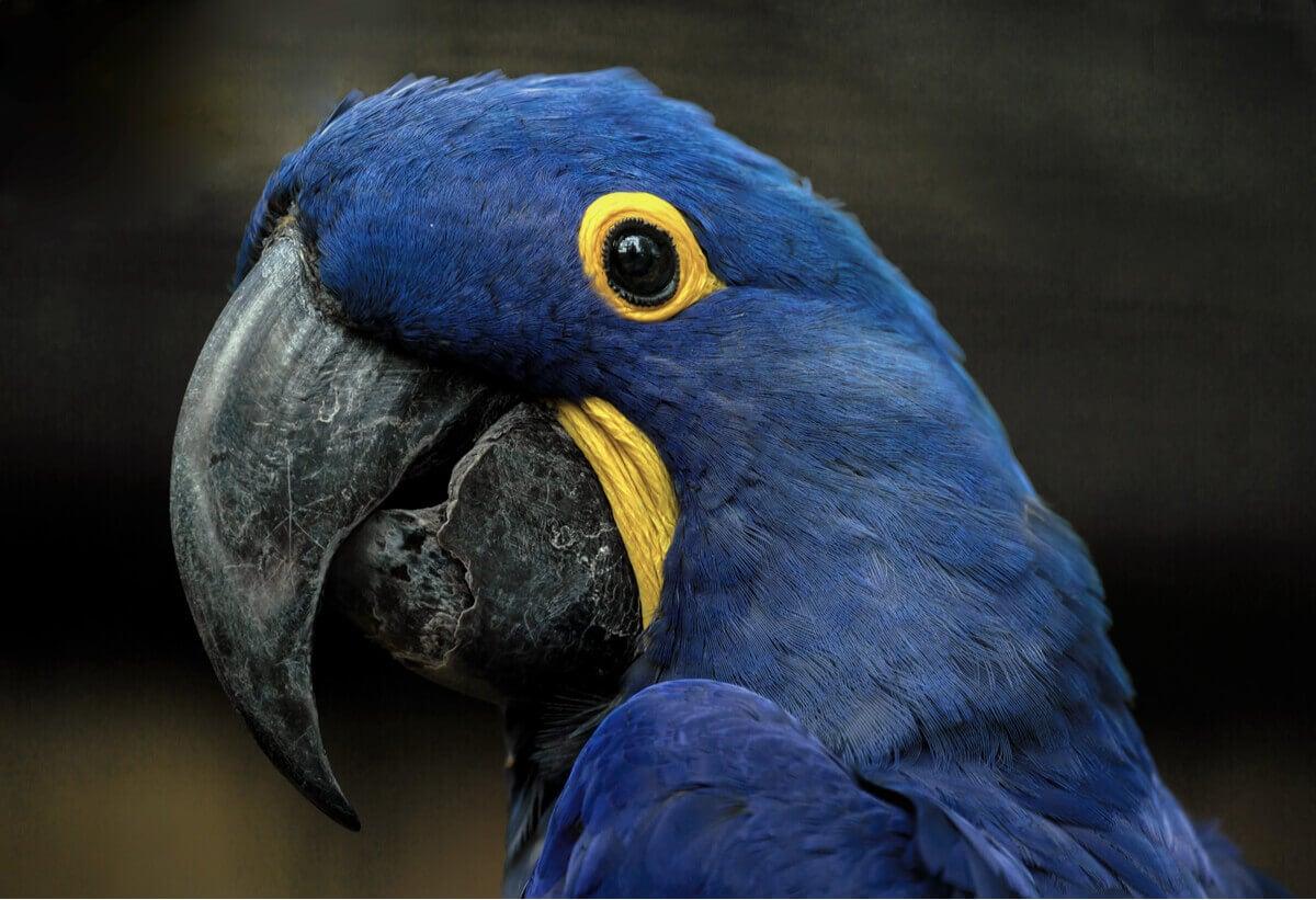 papağan türleri, papağanlar,