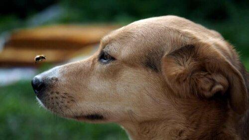 Köpeklerde Böcek Sokması ve Alerjileri Nasıl Tedavi Edilir