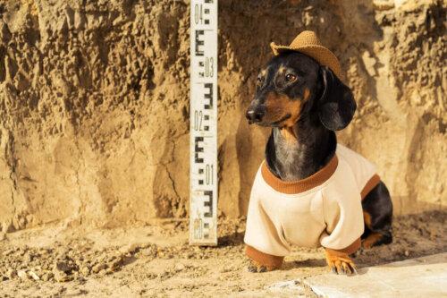 arkeolog gibi giyinmiş bir köpek