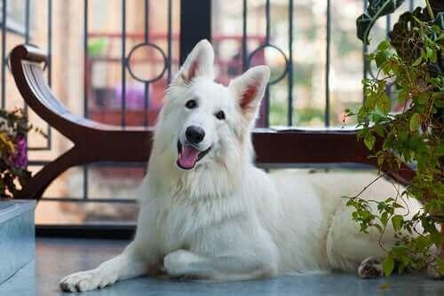 Balkonlu Evde Evcil Hayvan Güvenliği: Alınacak Önlemler