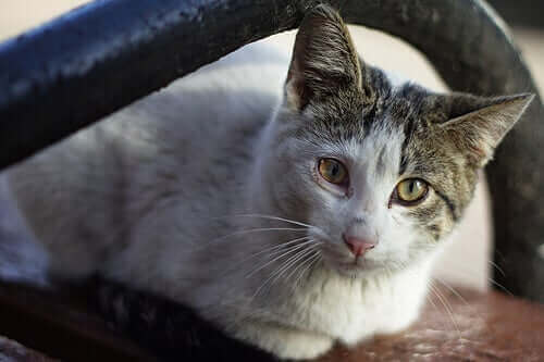Kedilerde Kanser Belirtileri: Neye Bakmalısınız