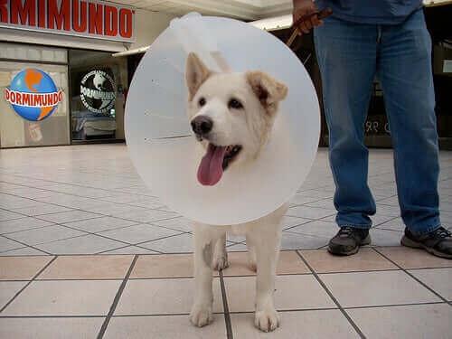 Evcil Hayvan Başlığı Alternatifleri: Dostlarınız İçin Seçenekler