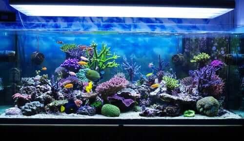 Deniz Akvaryumu için Nasıl Bakım Yapılmalıdır