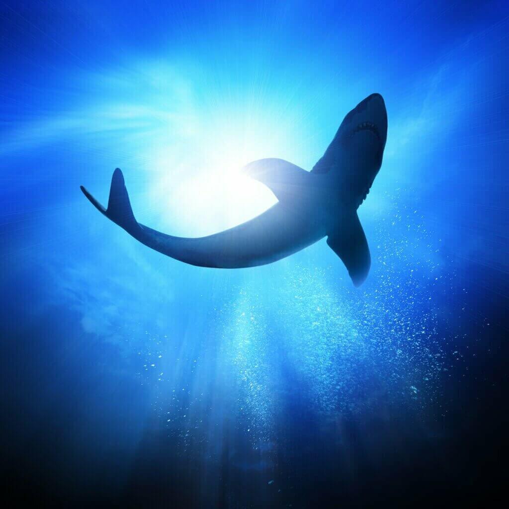 Dikenli Köpek Balığı: Özellikleri ve Habitatı