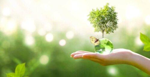 Ekolojik Zincir: Ne Olduğunu Biliyor Musunuz?