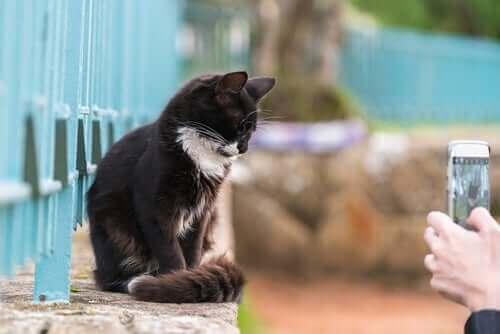 Evcil Hayvan Fotoğrafları: Sabit Durmalarını Sağlamak