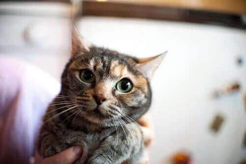 Kedi Bakımı - Gergin Bir Kedi Nasıl Sakinleştirilir