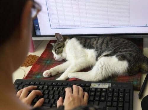 İş Yerinde Kediler: Japonya'da Kediler İşe Başlıyor