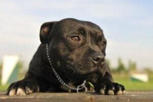 Köpekler için evcil hayvan sigortası