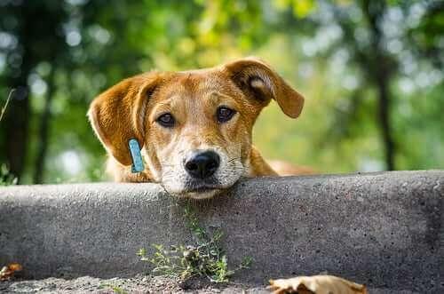 Kırma köpekleri özel kılan nedir?