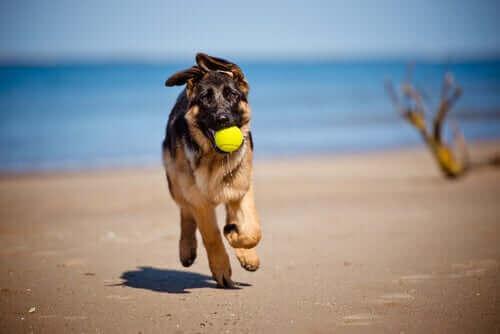 Köpeğime Güneş Kremi Sürebilir miyim?