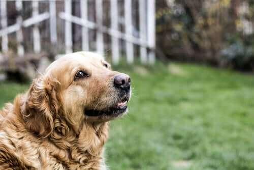 Köpek hırsızlığını önlemek için neler yapılabilir?