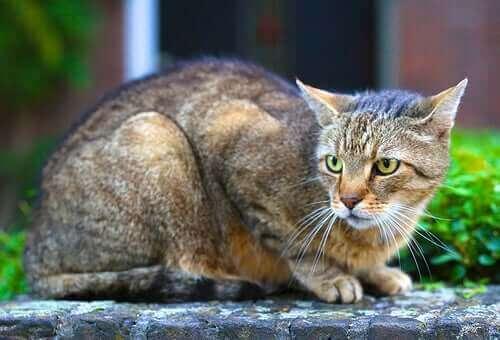 5 Farklı Kedi Kişiliği Tipi