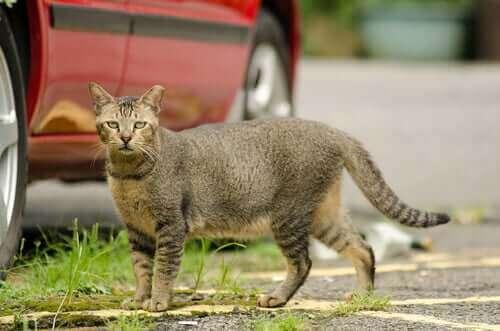 Kedilerin kuyurkları ne anlatıyor?