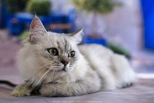 Kedi Patileri Hakkında 6 Harika Gerçek