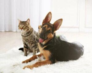 Bir kedi ve köpek