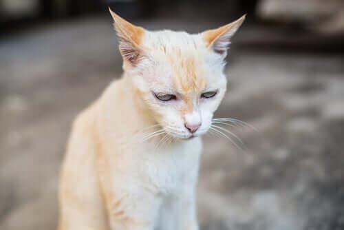 Yaşlı Kedilerde Kronik Böbrek Rahatsızlığı: Bilmeniz Gerekenler