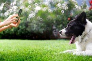 Kameraya gülen köpek