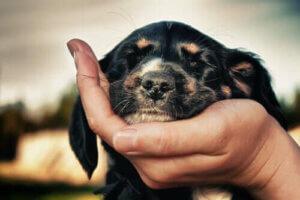 Gözleri kapalı bir köpek
