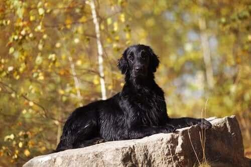Köpekler ve Büyücülük: Kısa Tarihi
