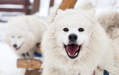 Amazon 10 Yıla Köpeklerle Konuşabileceğimizi Söylüyor