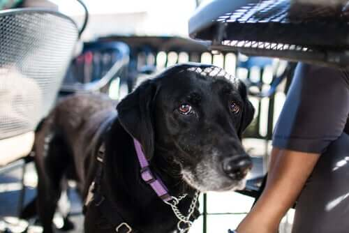 Köpeğinizle Uçak Yolculuğu: Seyahat Önerileri