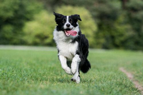 En Kaygılı Köpek Türleri Hangileridir?