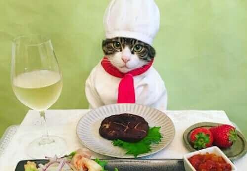 Ünlü Kedi Maro ve Instagram Hesabı