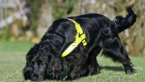 Molly ile Tanışın: Kurtarma Köpeği ve Kedi Dedektifi