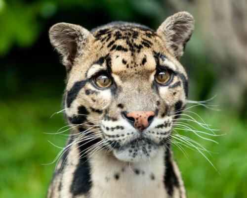 Hayvanlar Aleminin Az Bilinen Soylularını Keşfedin