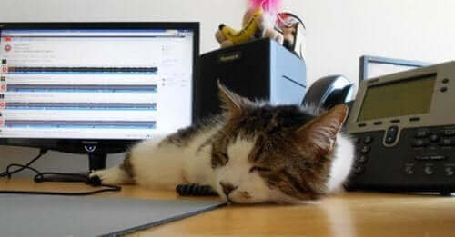 İş yerinde kedi bulundurmak kaygı ve stresi azaltıyor.