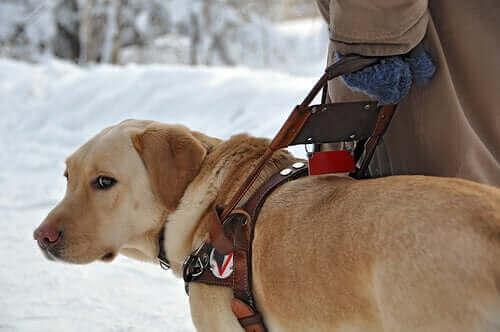 Rehber Köpekler Hakkında Bilmeniz Gereken Her Şey