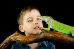 Egzotik Sürüngen ve Amfibiler Salmonellaya Neden Olabilir