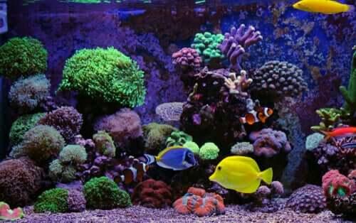 tuzlu su tankında balıklar