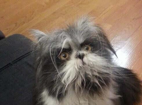 Twitter Dünyasında Garip Bir Hayvan: Köpek mi Kedi mi?