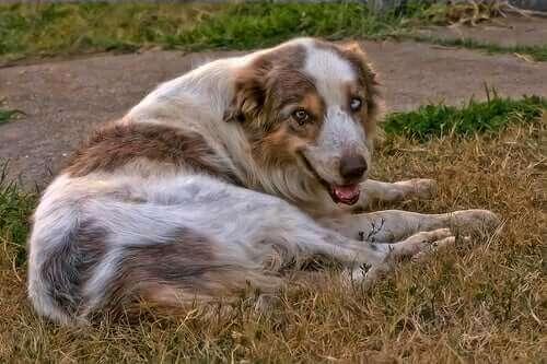 Köpeklerde Kireçlenme Belirtileri ve Tedavisi