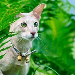 zilli tasmalar - zilli tasma takan bir kedi.