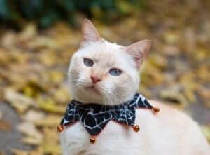 Zilli tasmalar - zilleri olan bir tasmayı takan kedi.