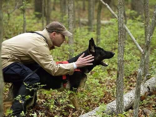 Köpeğiniz İçin En İyi Köpek Eğitmeni Nasıl Seçilir?