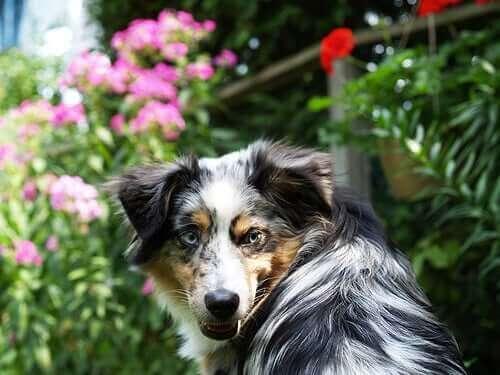 Köpek Isırıkları ve Yapılması Gerekenler