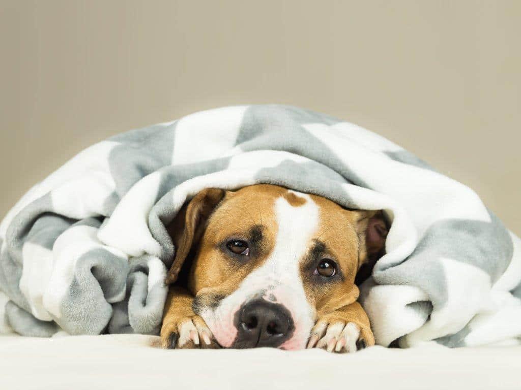 köpek hastalıkları, cinsel hastalıklar