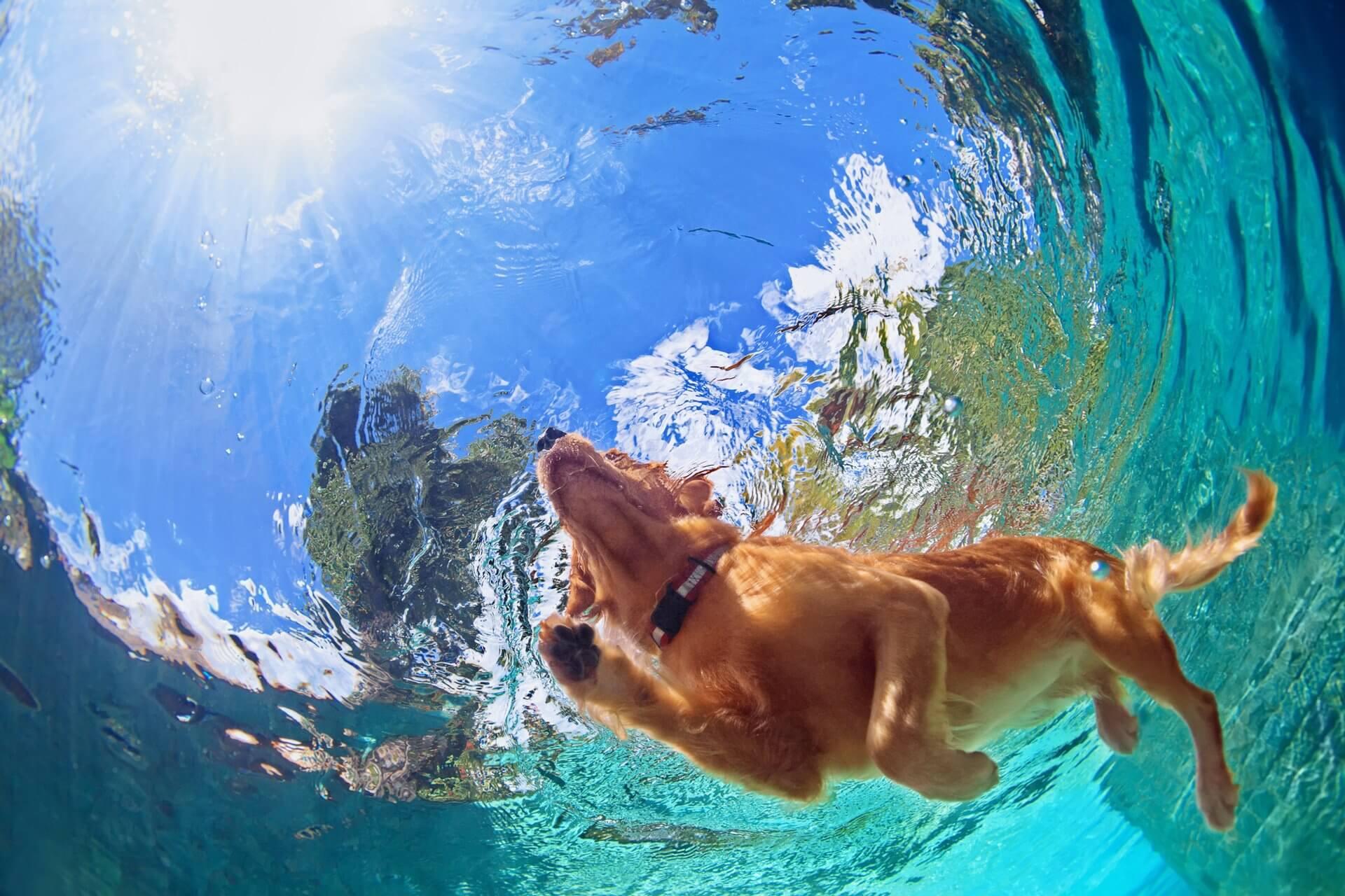 iyi yüzen köpekler, köpekler