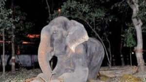 acı çeken mutsuz fil