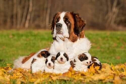 Bir anne köpek ve yavruları.