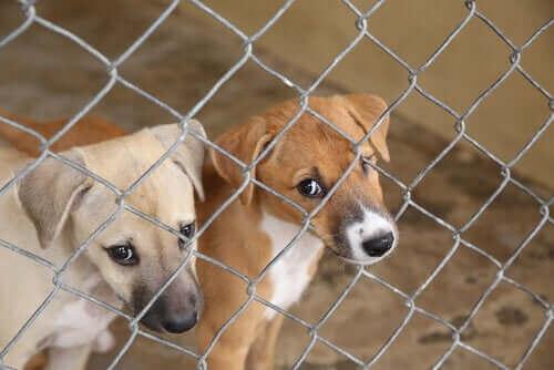 Barınaktaki iki köpek yavrusu.