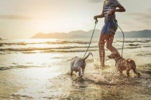 köpekleriyle yüzen kadın