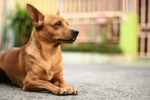 Köpeklerde En Sık Görülen Cilt Problemleri